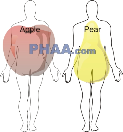 Apple and Pear Shaped Women – Meaning, Picture, Health ...