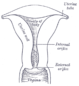 black vagaina A vagina tightening wand/rod in the shape of a 12 .