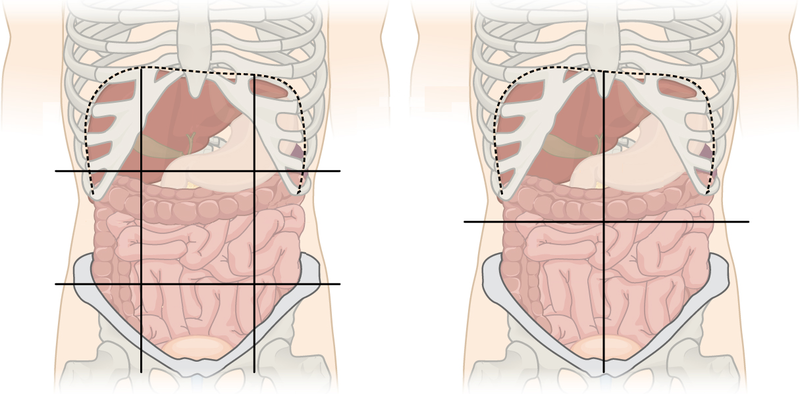 stomach anatomy parts of the stomach location in the. Black Bedroom Furniture Sets. Home Design Ideas